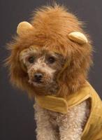 tiro na cabeça do cão leão foto
