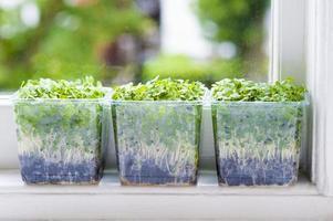 salada de agrião foto
