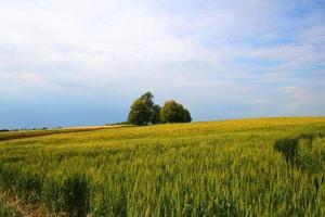 panorama foto