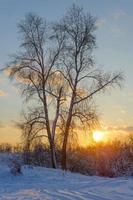 bela paisagem de inverno foto