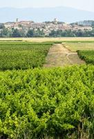 paisagem perto de carcassonne foto