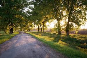 estrada florestal. panorama. foto