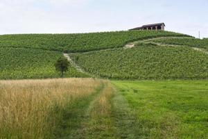 monferrato (piemonte): paisagem