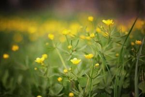 prado flores paisagem de verão