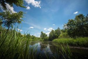 pântano de paisagem no verão