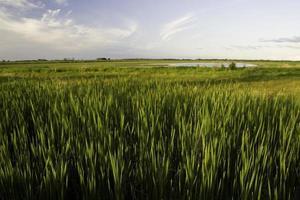 paisagem da pradaria foto