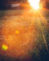 paisagem do prado ao pôr do sol foto