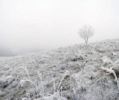 paisagem de montanha calma de inverno foto