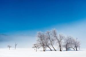 fundo de paisagem de luz de inverno foto