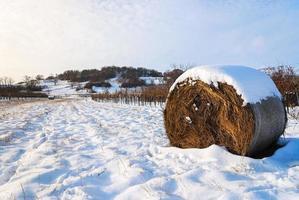 paisagem de inverno com fardos de feno foto