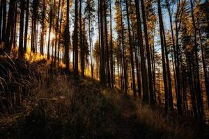 bela paisagem de madeiras de montanha de outono foto