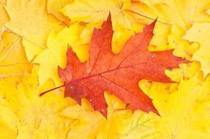 folha de outono foto