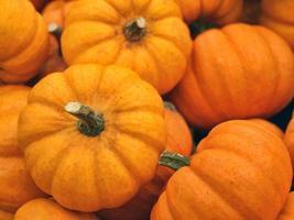 cabaças de outono