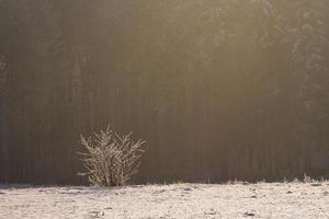 pôr do sol de inverno foto
