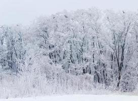 floresta de inverno foto