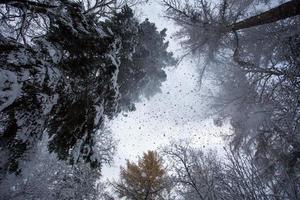 telhado da floresta de inverno foto