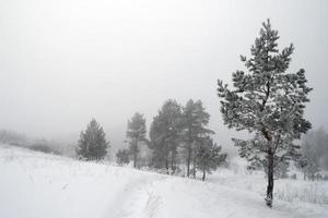 paisagem nebulosa de inverno com pinheiros