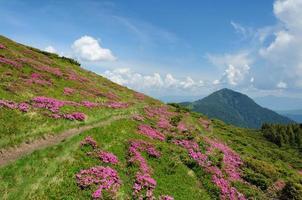 paisagem de verão com encostas de montanha florescendo.