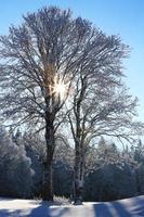 paisagem de inverno e árvores envoltas em neve foto