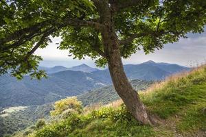 paisagem vista debaixo de uma árvore