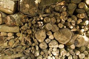 fundo de galhos de madeira