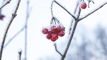 bagas de inverno foto