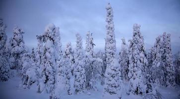 pôr do sol na floresta de inverno