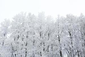 parque de inverno na neve foto