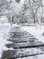 estrada de inverno em uma floresta foto