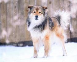 cachorro engraçado no inverno foto