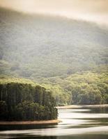 floresta do lago