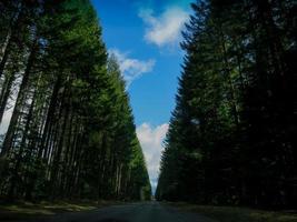 longa fila de árvores