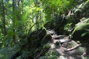 floresta tropical em mossman gorge daintree national park