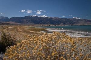 mono lago califórnia foto