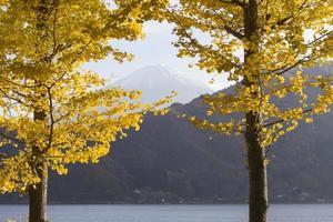 folhas de ginkgo e mt.fuji, japão