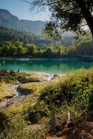 árvore e lago foto