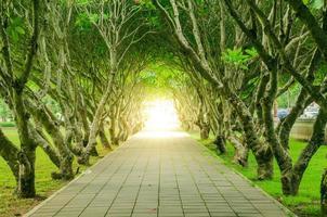 túnel de árvore e rosa do deserto