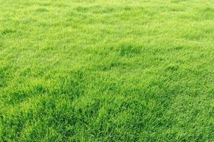 campo de grama verde fresco natural foto