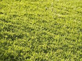 fundo do gramado foto