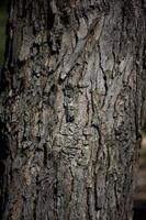 casca de árvore na luz solar