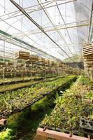 fazenda de orquídeas foto