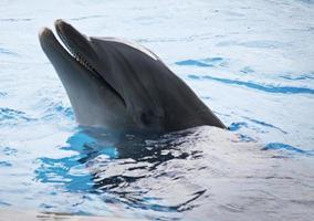 golfinho foto