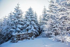clareira de esqui na madeira coberta de neve