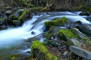floresta tropical de washington foto
