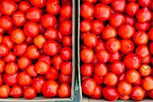 caixas cheias de tomates foto