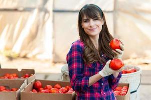 jovem mulher selecionando tomates foto