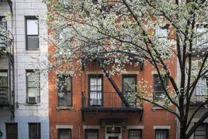 árvore florescendo, prédio de apartamentos, manhattan, nova iorque foto