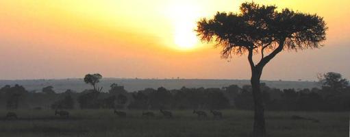 pôr do sol em kenia, masai mara, acácia de espinho de guarda-chuva foto