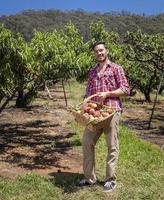 agricultor com pêssegos foto