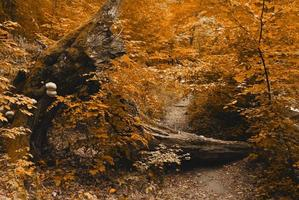 floresta de outono